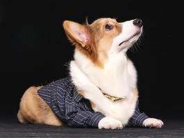 被狗咬了以后不用打疫苗的情况分哪几种?